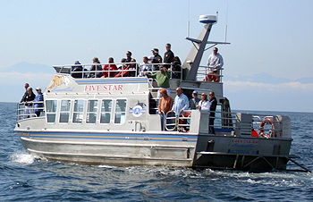 whale-watching boat